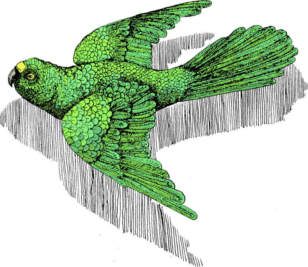 Cosimo Collection Lucky Green Bird Beauty is a universal human right. Luck comes in the appreciation and practice of beauty. Rights must be cultivate